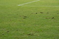 20. Spieltag: Preußen Münster - TSV 1860 München 0:1. Schlimmer Rasen in Münster.